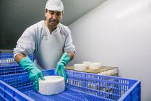 Man Putting Cheese Wheels In Box