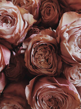 Macro Image Of A Light Pink Cloudy Rose