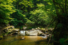 The Source Of River In Deep Forest In Nagano, Japan