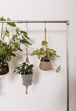 Ornamental Plants To Beautify The House.