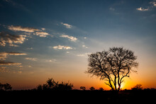 Iconic African Tree Against Dramatic Skies