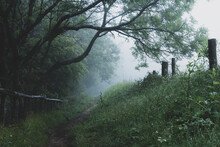 A Path Next To Woodland. On A Moody, Foggy Day.