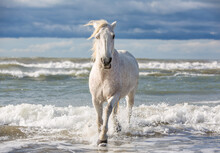White Horse In The Sea