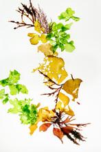 Seaweed Background Texture