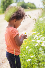 Toddler Girl Picking White And Yellow Daisies By The Side Of A Dirt Country Road