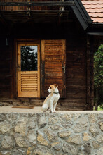 Dog Standing In Front Of A Mountain Cabin