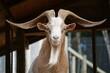 brazilian farm animals