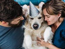 Golden Retriever Dogs Birthday