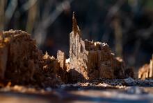 Holz Makro Detail Nahaufnahme Struktur Maserung Silhouette Skyline Kirche Turm Splitter Braun Licht Zerfall Baum Phantasie Spitze Fasern Natur Hintergrund Formen Sonne Borke Struktur Sonne