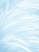 Beautiful Abstract Blue Feathers On White Background, Black Feather Texture And Blue Background, Feather Wallpaper, Blue Texture Banners, Love Theme, Valentines Day, Light Blue Texture