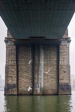 Seagulls Flying Under The Bridge