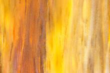 Petrified Wood Fossil Close Up
