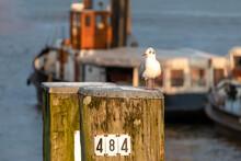 Eine Möwe Steht Auf Einem Pfahl Im Hafen