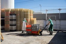 Workers Moving Products In The Cheese Factory.