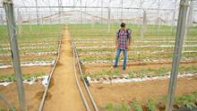 A Farmer Spraying Plants In A Greenhouse