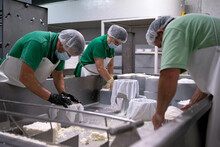 Making Of Cheese In A Traditional Factory.