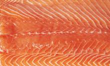Raw Salmon Closeup