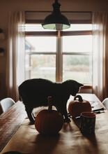 Kitty And Pumpkins