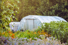 Homemade Plastic Greenhouse Exterior With Rain Water Saving Container In Organic Garden Field, With Lot Of Different Plants Growing Outdoors. Beautiful Golden Light, Scenic View.