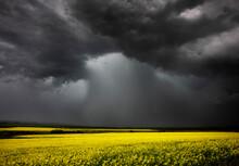 Summer Storm Over A Farmers Crop.