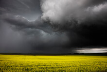 Summer Storm Over A Farmers Crop.