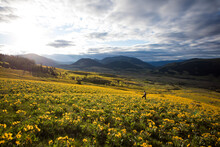Endless Fields Of Wildflowers In The Mountains Of BC
