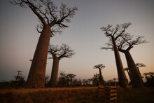 Low Distorted View Of African Trees