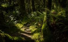 Milford Sound Jungle.