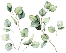 Watercolor Floral Set Of Eucalyptus Seeds, Leaves And Branches. Hand Painted Silver Dollar Eucalyptus Isolated On White Background. Illustration For Design, Print, Fabric Or Background.