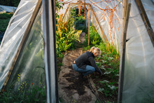 Mature Woman Weeding In The Greenhouse