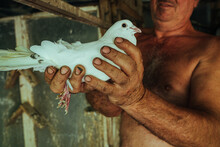 Pigeon Fancier Holding A White Dove
