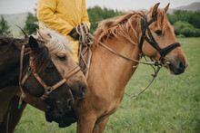 Three Horses Together