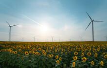 Windmill Farm In A Sunflowers Field
