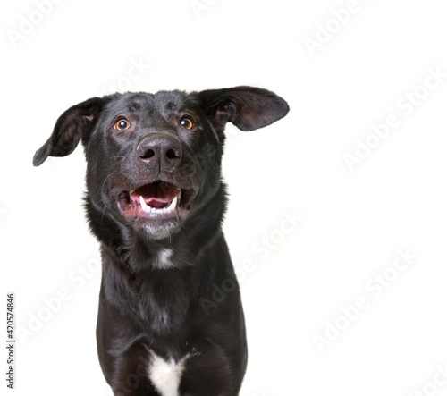 Carta da parati cute dog studio shot on an isolated white background