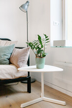 Detail Photo Of A Couch, A Green Plant And A Lamp