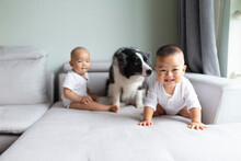 Asian Baby Playing With Dog At Home