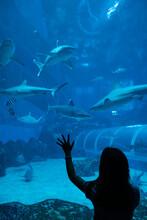 Girl At Aquarium With Many Sharks