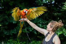 A Macaw Flapping It's Wings