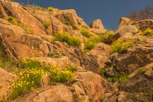 USA, Oklahoma, Wichita Mountains National Wildlife Refuge. Wildflowers And Boulders.