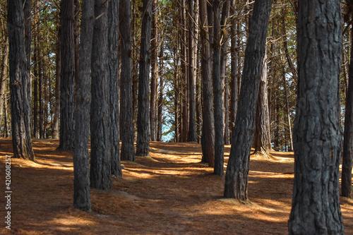 Bosque simétrico
