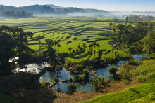 Green Land With A Rice Paddies