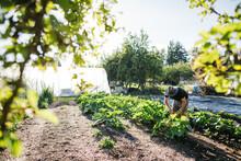 Young Farmer Man Working On Small Organic Farm