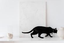 Black Domestic Cat On Shelf In Light Room