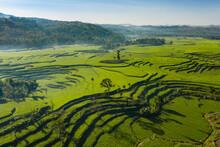 Green Rice Terraces