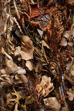 Autumn Harvest Wild Plant Background