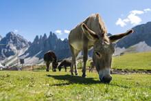 Donkeys On The Italian Dolomites, European Alps Area
