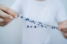 Blue Lavender Flower