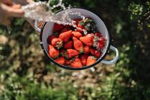 Washing Fresh Strawberries