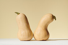 Two Butternut Squash In Still Life