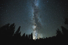 Milky Way Stars Above Trees